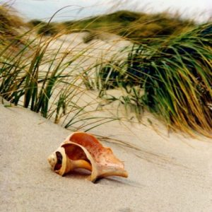 cropped-dune-shell11.jpg
