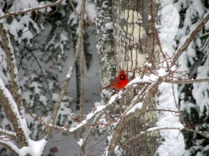 Cardinal Red on White